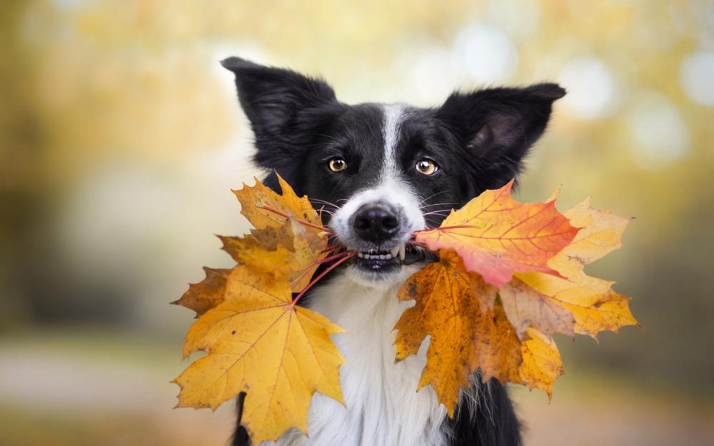 Уход за старой собакой. Крайне полезны собаке в старческом возрасте витамины