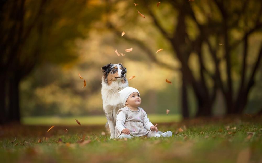 """Собака и новорожденный. Как правило, отношение собаки и ребенка складываются достаточно гладко, если у собаки здоровая, крепкая психика, и она не привыкла считать себя """"центром вселенной"""" своих хозяев."""