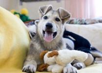 Активные, игривый щенок