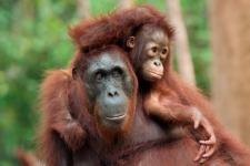 Дружные обезьяны
