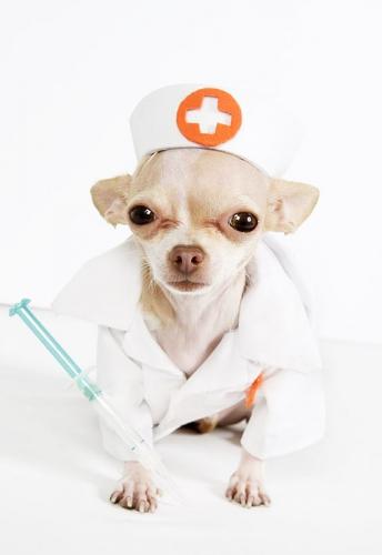Собака-врач всегда готова вам помочь!