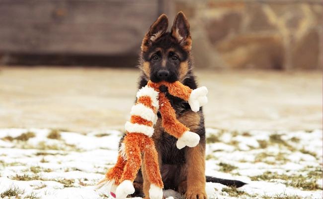Игрушки для собак очень важны