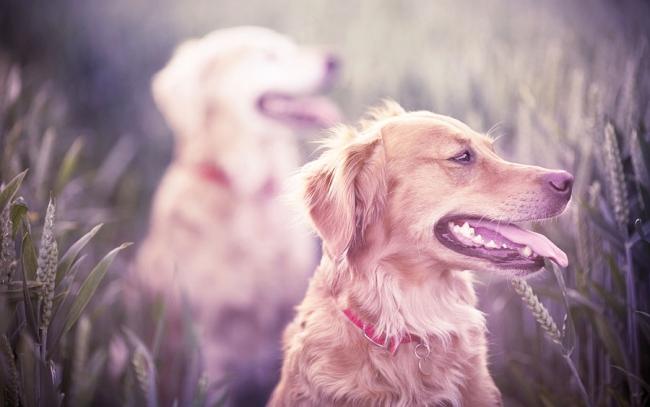 Красивая собака с ухоженными зубами