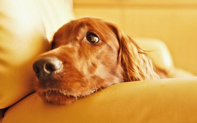 Обязательно следите за собакой после стерилизации