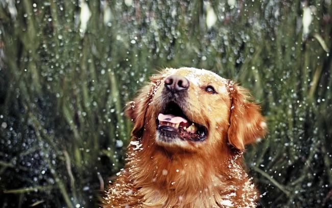 Собака ловит ртом снег и капли дождя