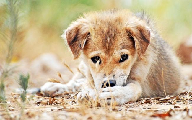 Как ухаживать за осиротевшими щенками?