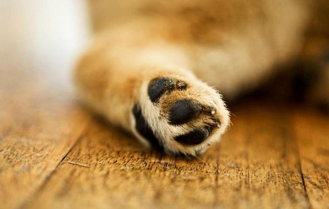 Стричь когти собаке нужно обязательно