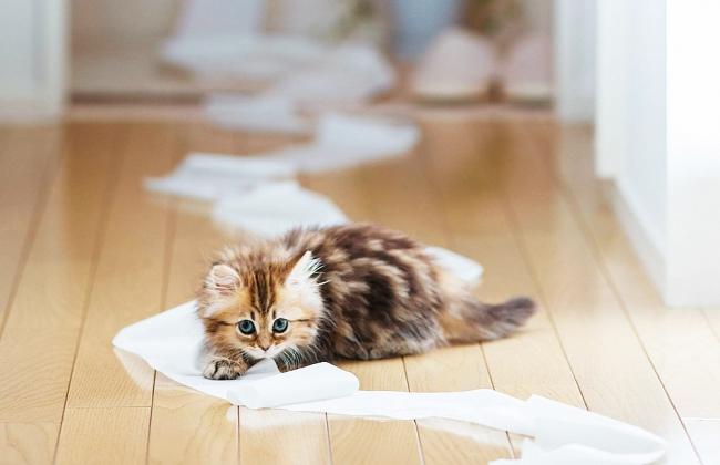 Будьте терпеливы, когда приучаете котенка к туалету