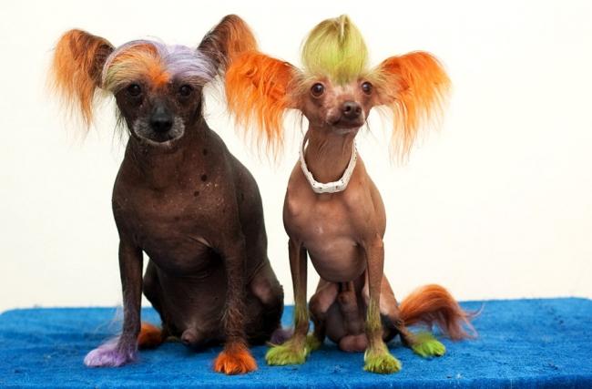 Смешно раскрашенные собаки