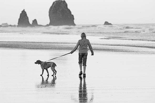 Собака не плутает по лабиринту моральных обязательств