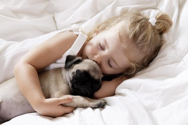 Выбор собаки для ребенка очень ответственный шаг