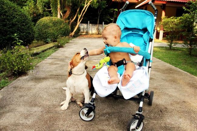 Собака может ревновать к новорожденному