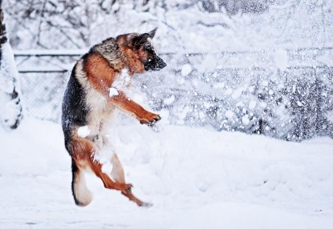 Зимой за собакой необходимо следить внимателньо