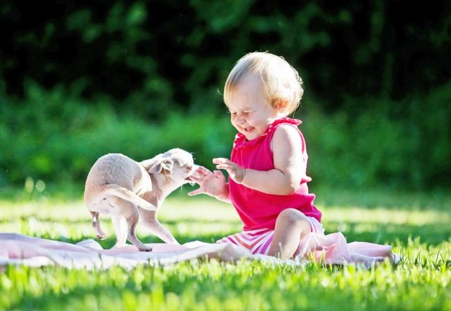 Ребенок и собака живут не всегда в полной гармонии