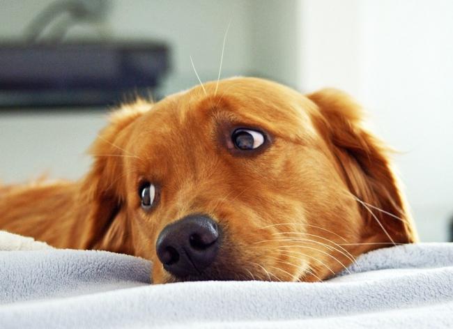 Обязательно следите за глазами собаки