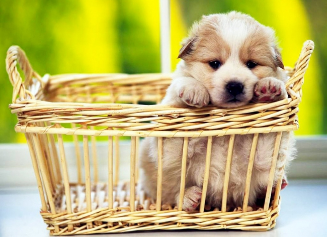 Детство, отрочество и юность собаки. Этапы развития