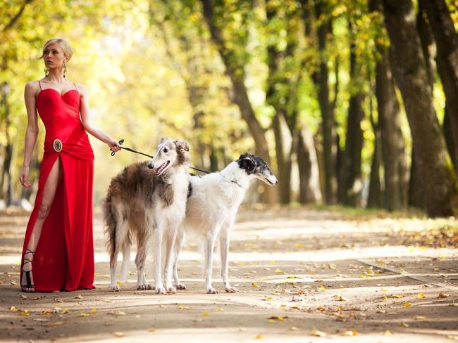Собака - отражение хозяина. Она ваше зеркало.