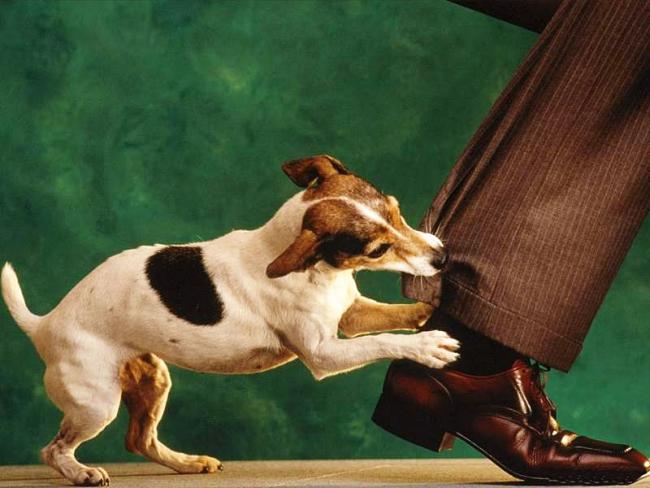 Почему собака кусает?