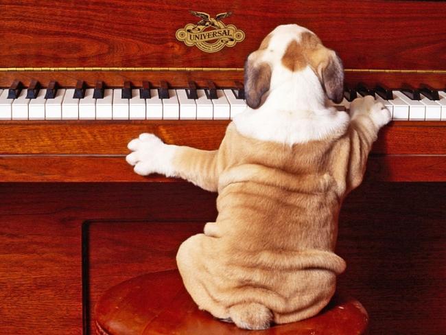 Из всех домашних животных собаки самые терпеливые