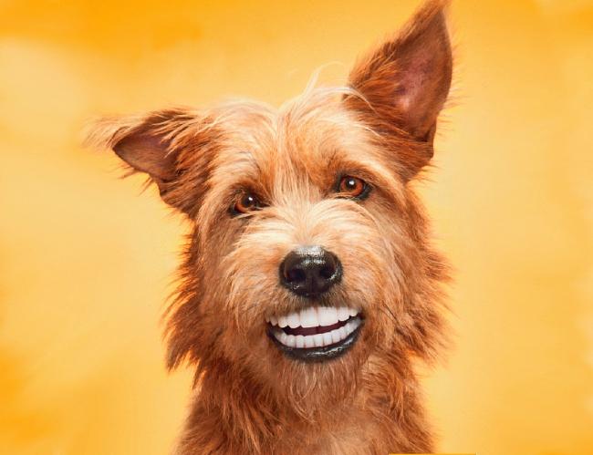 Забавная собака с человеческими зубами