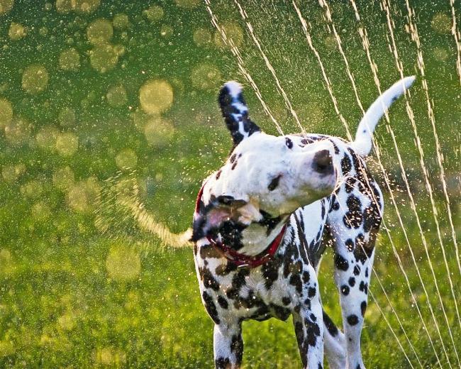 Собаки очень любят купаться