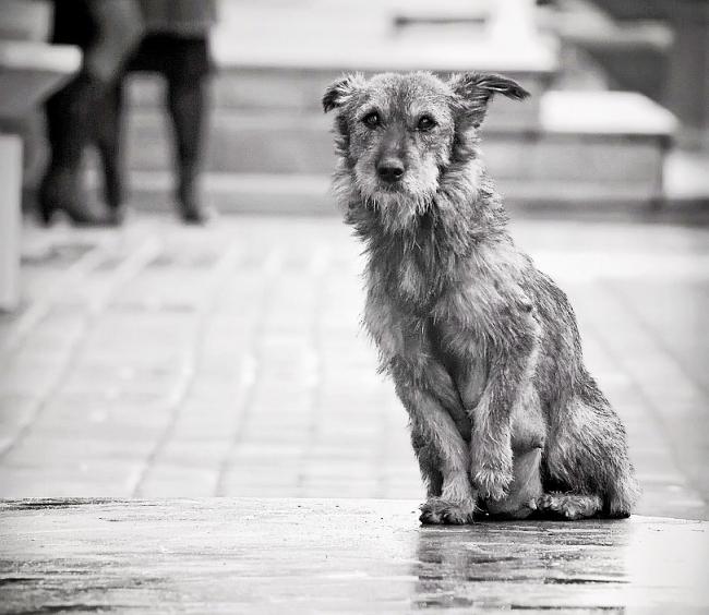 Дворовые собаки иногда могут быть опасны