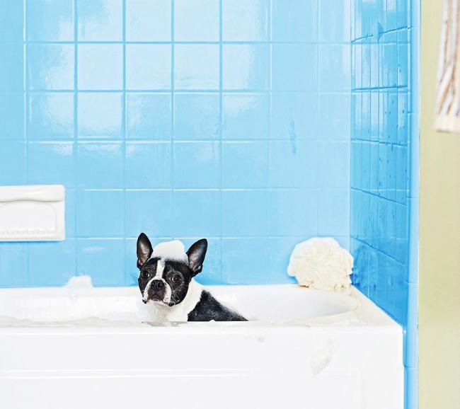 Собаки обожают купаться!