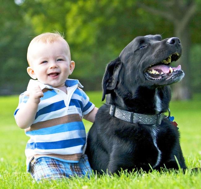 Появление ребенка сложный этап в жизни собаки