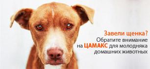 Цамакс для молодняка домашних животных